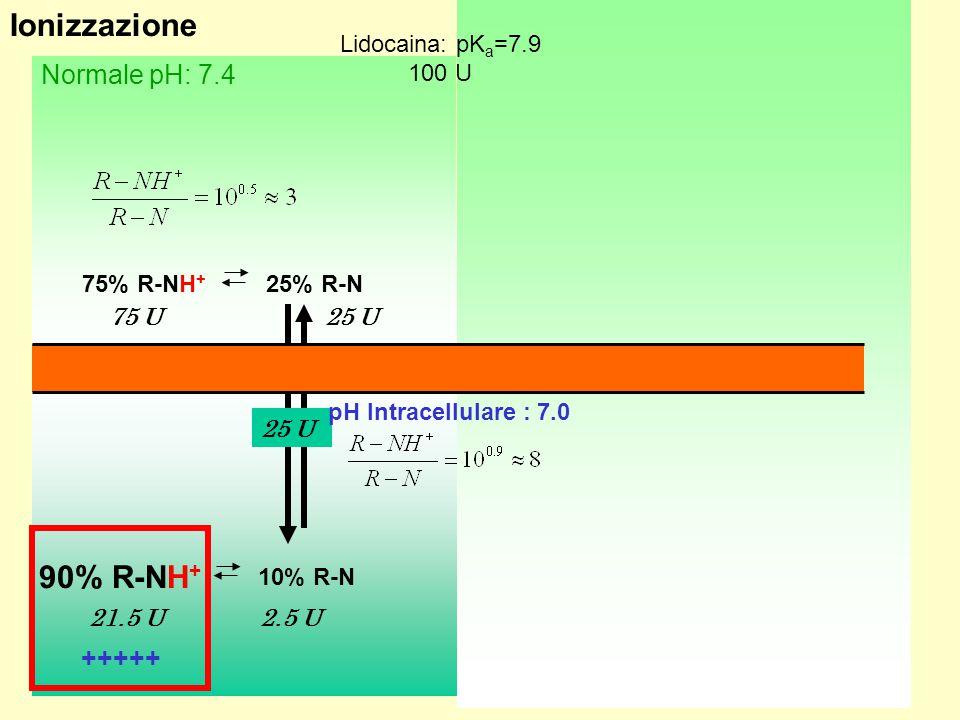 11 Infiammato: pH 6.5 Normale pH: 7.4 75% R-NH + 25% R-N 10% R-N 90% R-NH + 96% R-NH + 4% R-N 75 U 96 U4 U 2.5 U21.5 U 10% R-N 90% R-NH + 3.6 U0.4 U 25 U 4 U +++++ ---- Ionizzazione Lidocaina: pK a =7.9 100 U pH Intracellulare : 7.0