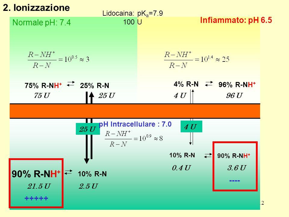 12 Infiammato: pH 6.5 Normale pH: 7.4 75% R-NH + 25% R-N 10% R-N 90% R-NH + 96% R-NH + 4% R-N 75 U 96 U4 U 2.5 U21.5 U 10% R-N 90% R-NH + 3.6 U0.4 U 25 U 4 U +++++ ---- 2.