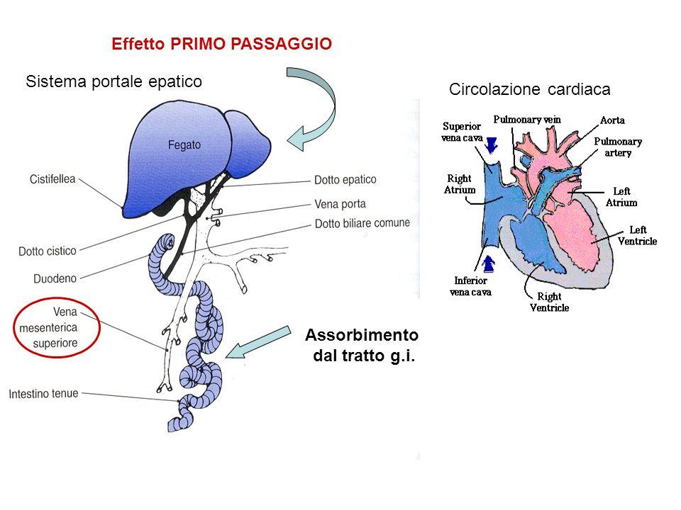 Sistema portale epatico Circolazione cardiaca Effetto PRIMO PASSAGGIO Assorbimento dal tratto g.i.