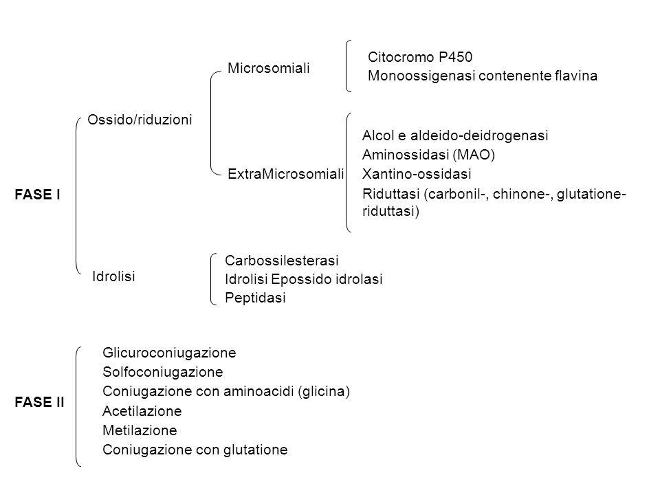 Microsomiali ExtraMicrosomiali Citocromo P450 Monoossigenasi contenente flavina Alcol e aldeido-deidrogenasi Aminossidasi (MAO) Xantino-ossidasi Riduttasi (carbonil-, chinone-, glutatione- riduttasi) FASE I Ossido/riduzioni Idrolisi Carbossilesterasi Idrolisi Epossido idrolasi Peptidasi FASE II Glicuroconiugazione Solfoconiugazione Coniugazione con aminoacidi (glicina) Acetilazione Metilazione Coniugazione con glutatione