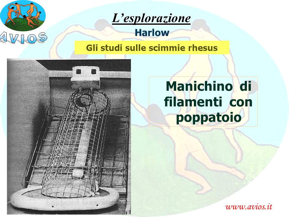 www.avios.itL'esplorazione Harlow Gli studi sulle scimmie rhesus Manichino di filamenti con poppatoio