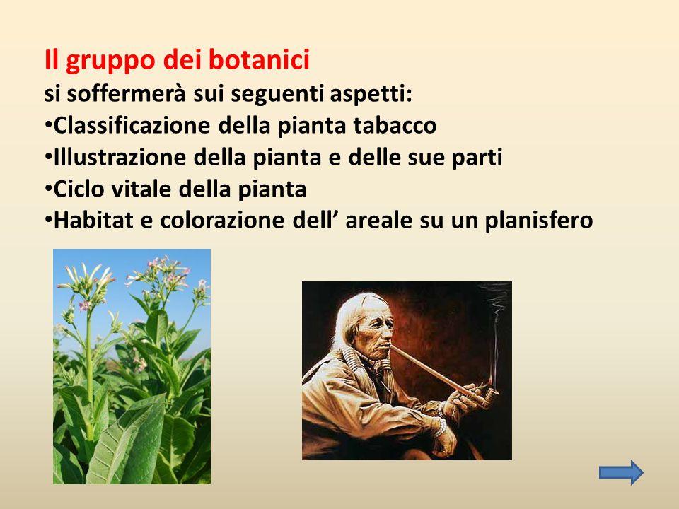 Il gruppo dei botanici si soffermerà sui seguenti aspetti: • Classificazione della pianta tabacco • Illustrazione della pianta e delle sue parti • Cic