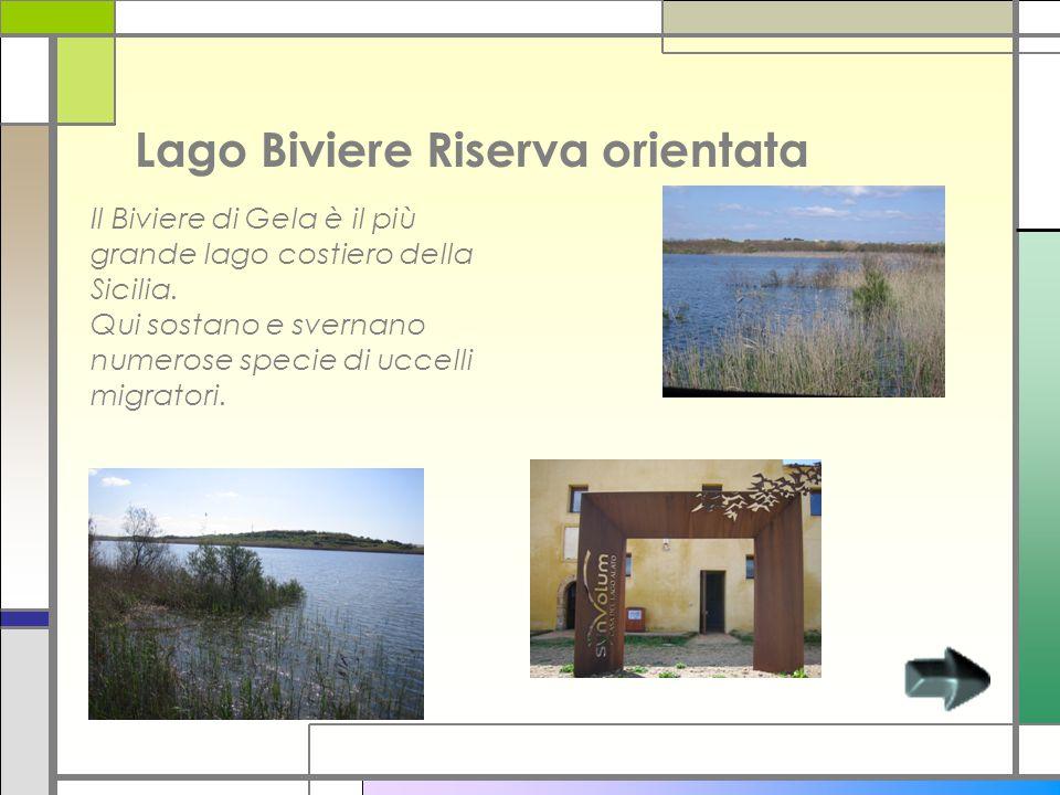 Lago Biviere Riserva orientata Il Biviere di Gela è il più grande lago costiero della Sicilia. Qui sostano e svernano numerose specie di uccelli migra