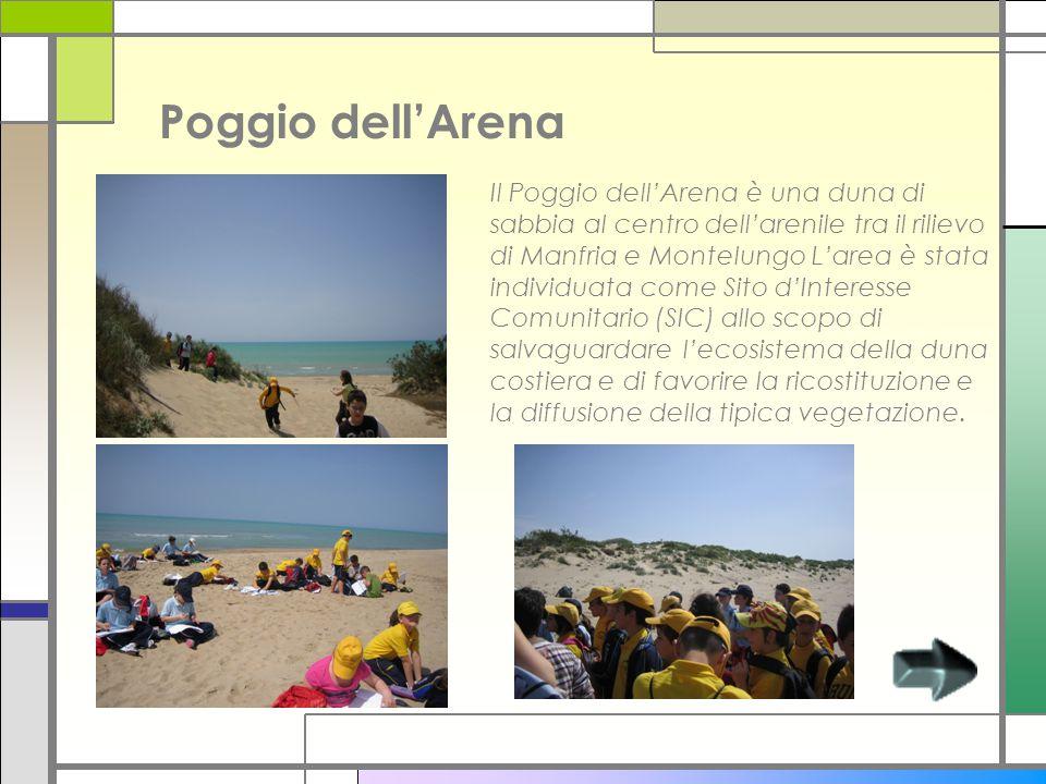 Poggio dell'Arena Il Poggio dell'Arena è una duna di sabbia al centro dell'arenile tra il rilievo di Manfria e Montelungo L'area è stata individuata come Sito d'Interesse Comunitario (SIC) allo scopo di salvaguardare l'ecosistema della duna costiera e di favorire la ricostituzione e la diffusione della tipica vegetazione.