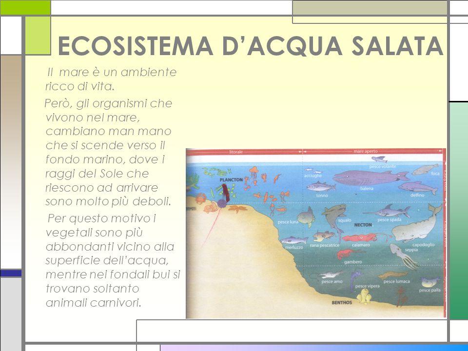 ECOSISTEMA D'ACQUA SALATA Il mare è un ambiente ricco di vita. Però, gli organismi che vivono nel mare, cambiano man mano che si scende verso il fondo