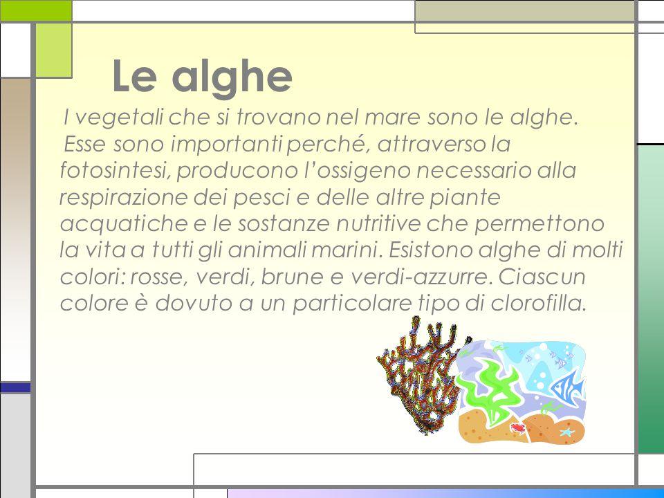 Le alghe I vegetali che si trovano nel mare sono le alghe. Esse sono importanti perché, attraverso la fotosintesi, producono l'ossigeno necessario all