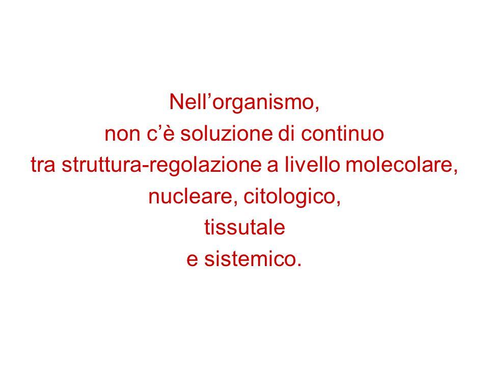 Nell'organismo, non c'è soluzione di continuo tra struttura-regolazione a livello molecolare, nucleare, citologico, tissutale e sistemico.