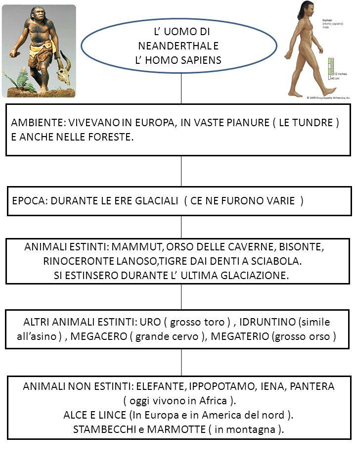 L'L' UOMO DI NEANDERTHAL E L' HOMO SAPIENS AMBIENTE: VIVEVANO IN EUROPA, IN VASTE PIANURE ( LE TUNDRE ) E ANCHE NELLE FORESTE. EPOCA: DURANTE LE ERE G