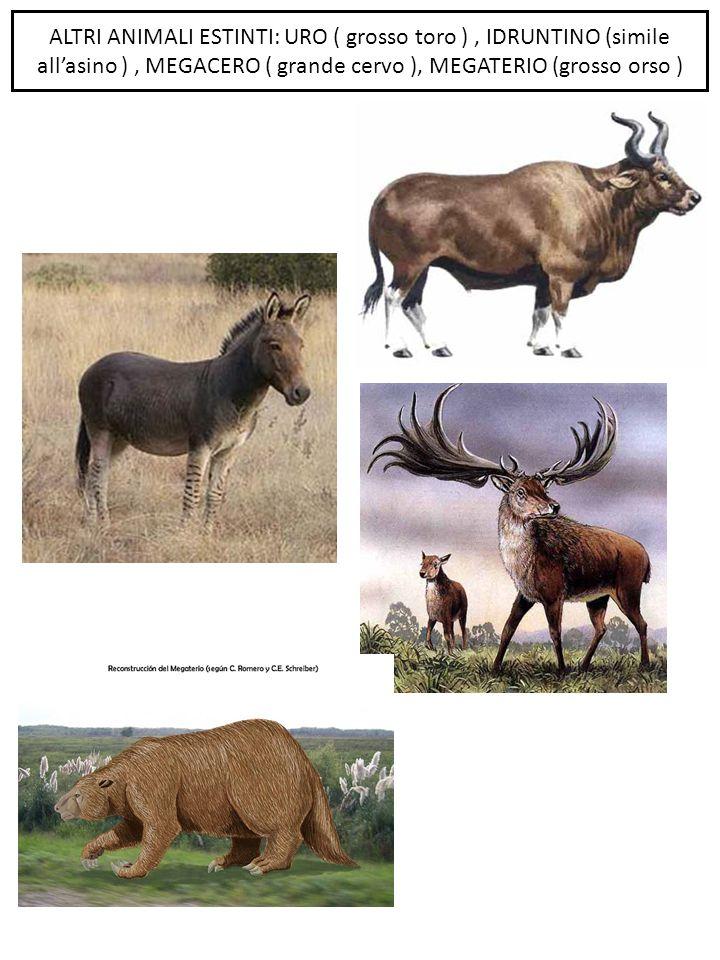 ALTRI ANIMALI ESTINTI: URO ( grosso toro ), IDRUNTINO (simile all'asino ), MEGACERO ( grande cervo ), MEGATERIO (grosso orso )