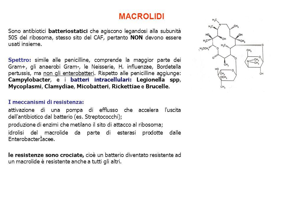 MACROLIDI Sono antibiotici batteriostatici che agiscono legandosi alla subunità 50S del ribosoma, stesso sito del CAF, pertanto NON devono essere usat