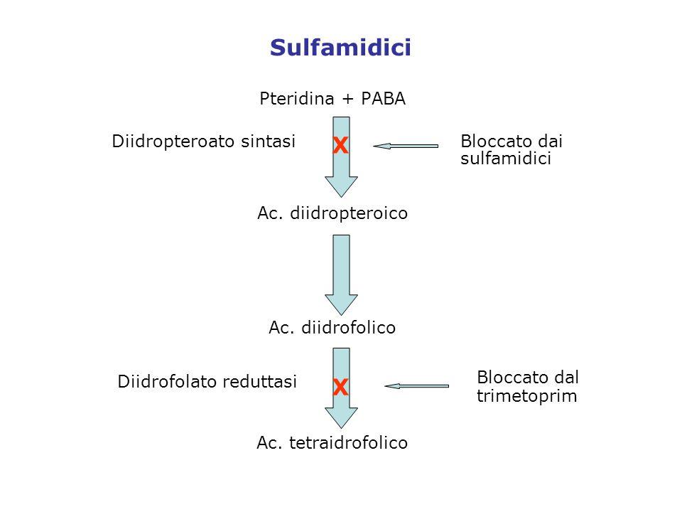 Sulfamidici Pteridina + PABA Ac. diidropteroico Ac. diidrofolico Ac. tetraidrofolico Bloccato dai sulfamidici Bloccato dal trimetoprim Diidropteroato