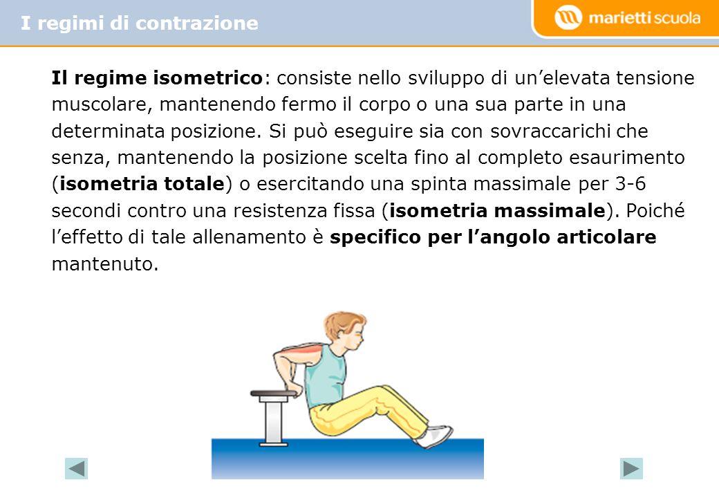 Il regime isometrico: consiste nello sviluppo di un'elevata tensione muscolare, mantenendo fermo il corpo o una sua parte in una determinata posizione