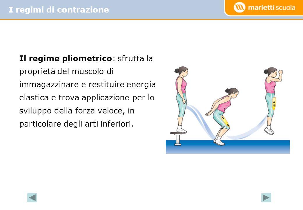 Il regime pliometrico: sfrutta la proprietà del muscolo di immagazzinare e restituire energia elastica e trova applicazione per lo sviluppo della forz