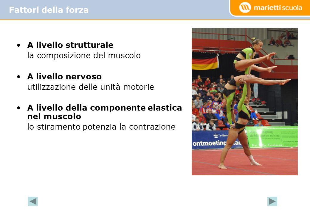 •A livello strutturale la composizione del muscolo •A livello nervoso utilizzazione delle unità motorie •A livello della componente elastica nel musco