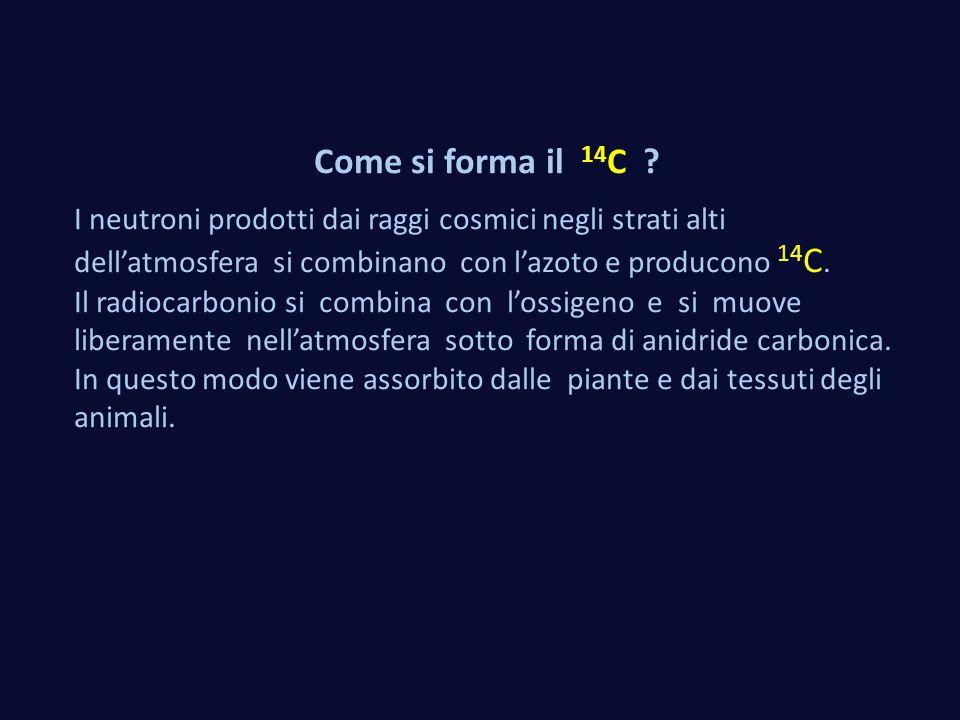 Come si forma il 14 C ? I neutroni prodotti dai raggi cosmici negli strati alti dell'atmosfera si combinano con l'azoto e producono 14 C. Il radiocarb
