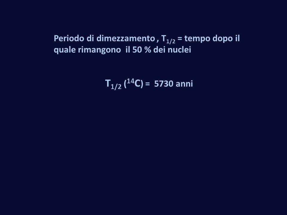 Periodo di dimezzamento, T 1/2 = tempo dopo il quale rimangono il 50 % dei nuclei T 1/2 ( 14 C ) = 5730 anni