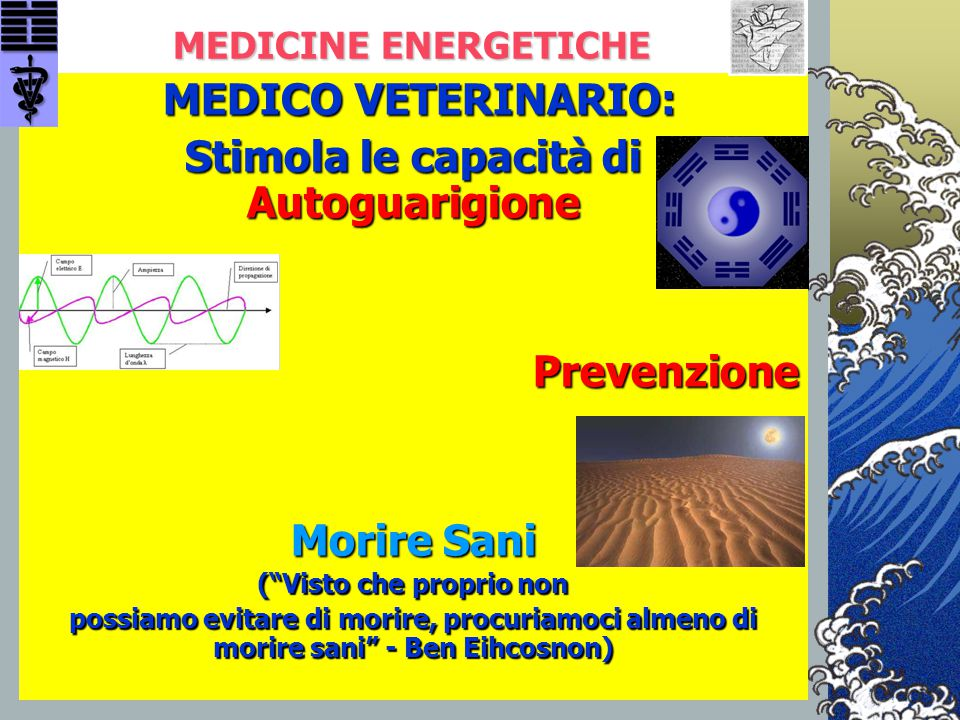 """MEDICINE ENERGETICHE MEDICO VETERINARIO: MEDICO VETERINARIO: Stimola le capacità di Autoguarigione Prevenzione Morire Sani (""""Visto che proprio non pos"""