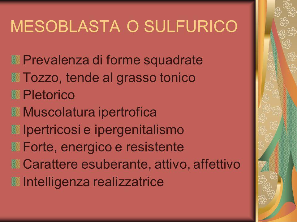 MESOBLASTA O SULFURICO Prevalenza di forme squadrate Tozzo, tende al grasso tonico Pletorico Muscolatura ipertrofica Ipertricosi e ipergenitalismo For