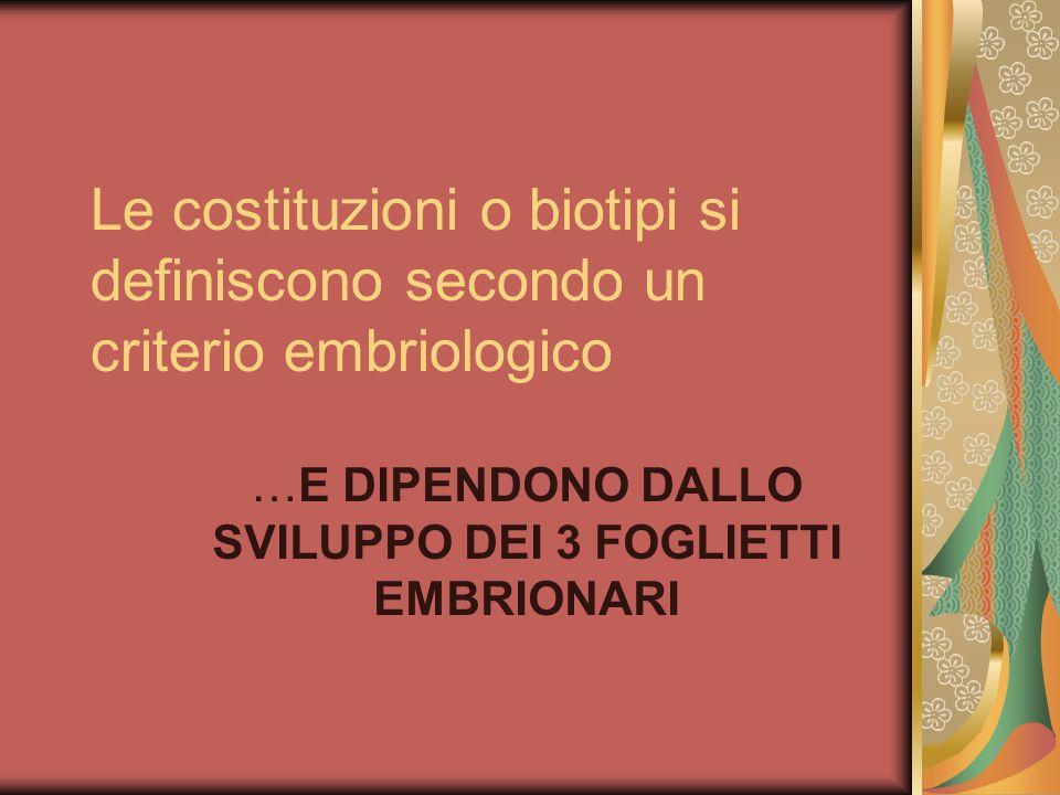 Le costituzioni o biotipi si definiscono secondo un criterio embriologico …E DIPENDONO DALLO SVILUPPO DEI 3 FOGLIETTI EMBRIONARI