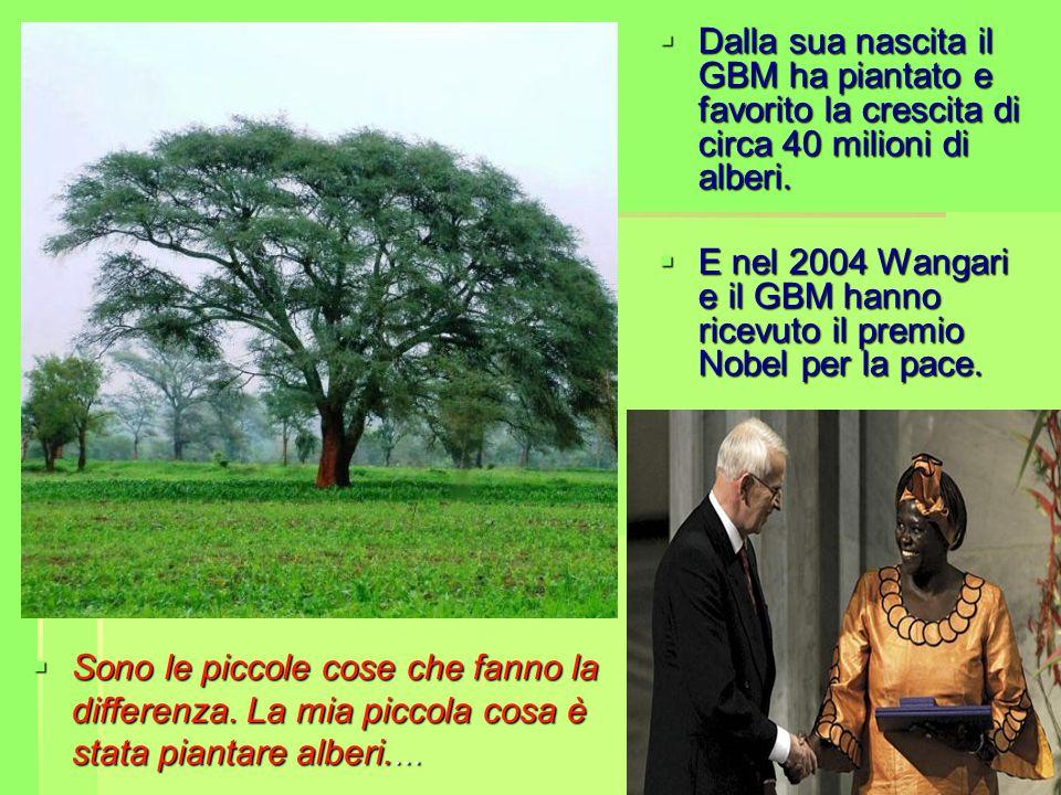  Dalla sua nascita il GBM ha piantato e favorito la crescita di circa 40 milioni di alberi.  E nel 2004 Wangari e il GBM hanno ricevuto il premio No