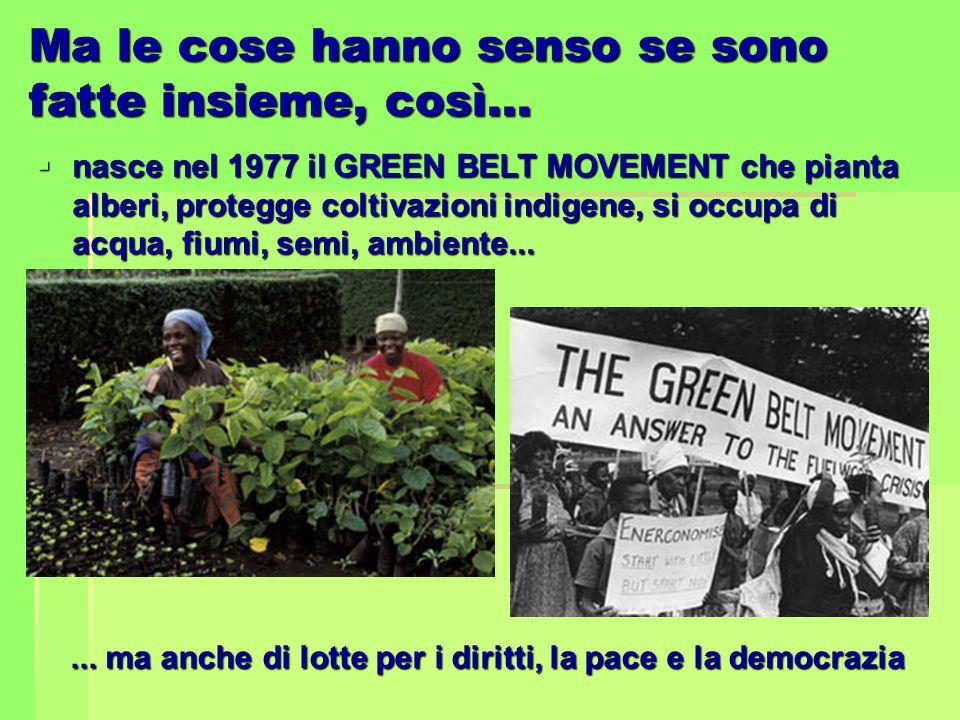 Ma le cose hanno senso se sono fatte insieme, così…  nasce nel 1977 il GREEN BELT MOVEMENT che pianta alberi, protegge coltivazioni indigene, si occu