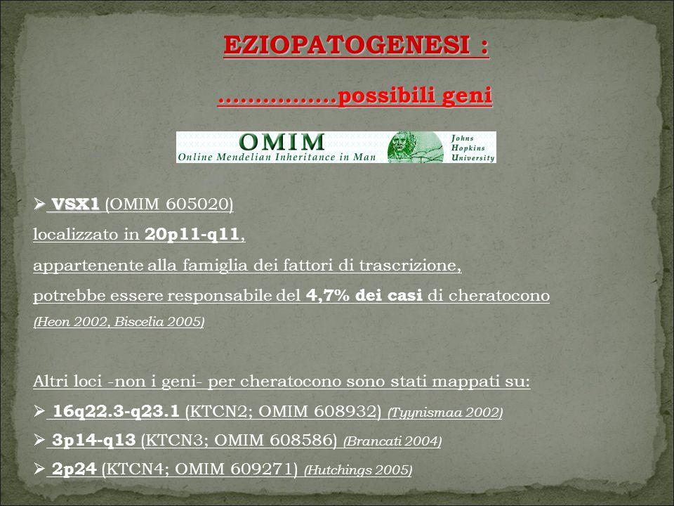 EZIOPATOGENESI : …………….possibili geni  VSX1  VSX1 (OMIM 605020) localizzato in 20p11-q11, appartenente alla famiglia dei fattori di trascrizione, potrebbe essere responsabile del 4,7% dei casi di cheratocono (Heon 2002, Biscelia 2005) Altri loci -non i geni- per cheratocono sono stati mappati su:  16q22.3-q23.1 (KTCN2; OMIM 608932) (Tyynismaa 2002)  3p14-q13 (KTCN3; OMIM 608586) (Brancati 2004)  2p24 (KTCN4; OMIM 609271) (Hutchings 2005)