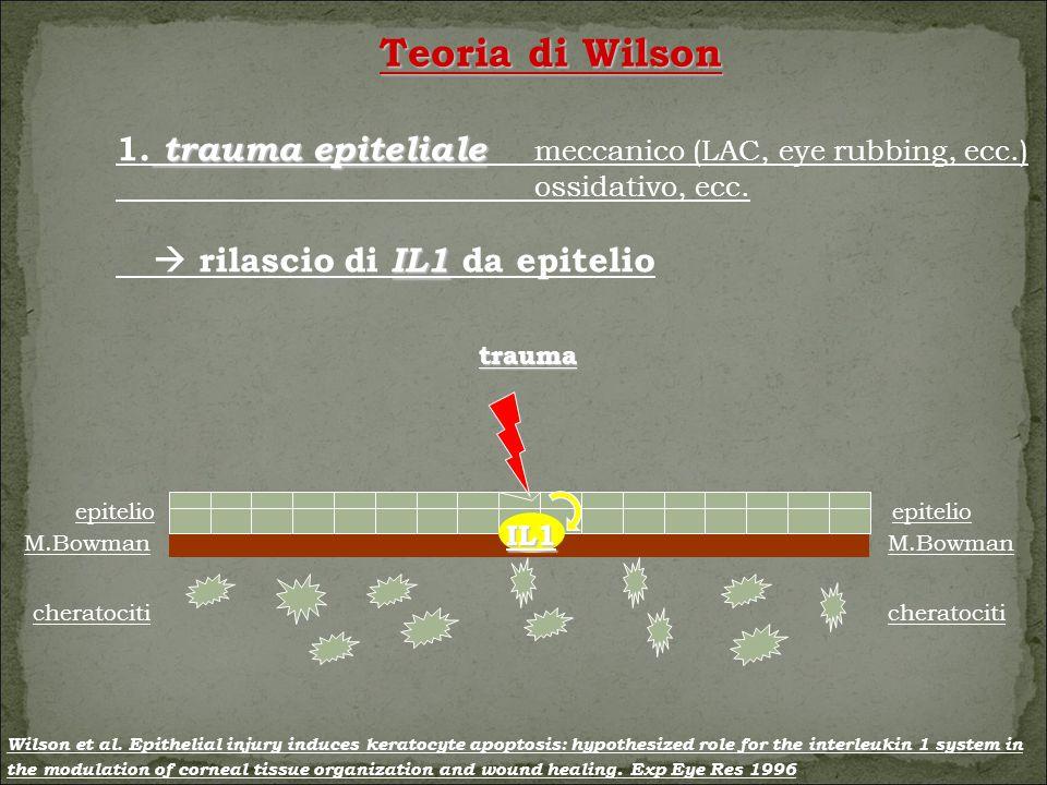 trauma epitelio M.Bowman cheratociti epitelio M.Bowman cheratociti IL1 Teoria di Wilson trauma epiteliale 1.