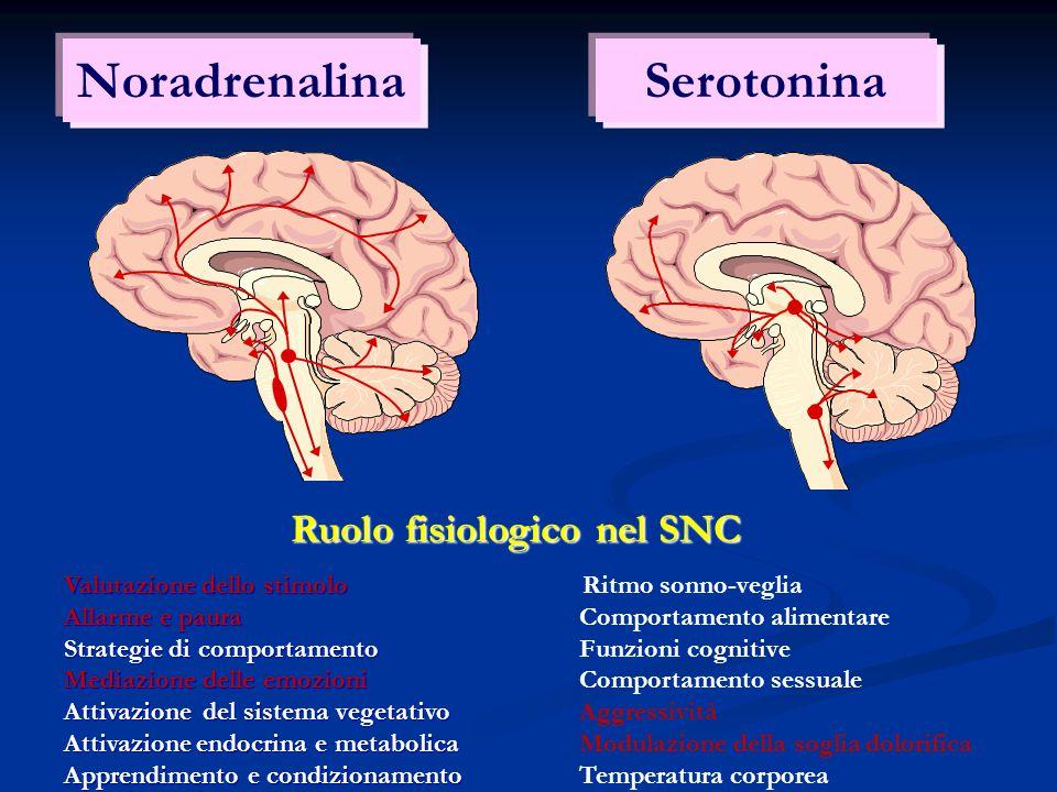 NoradrenalinaSerotonina Ruolo fisiologico nel SNC Valutazione dello stimolo Allarme e paura Strategie di comportamento Mediazione delle emozioni Attiv