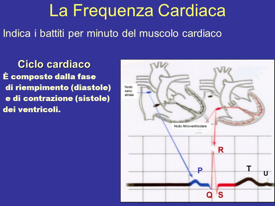 La Frequenza Cardiaca Indica i battiti per minuto del muscolo cardiaco Ciclo cardiaco Ciclo cardiaco È composto dalla fase di riempimento (diastole) e