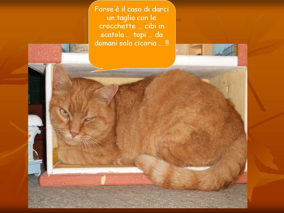 Forse è il caso di darci un taglio con le crocchette … cibi in scatola … topi … da domani solo cicoria … !!
