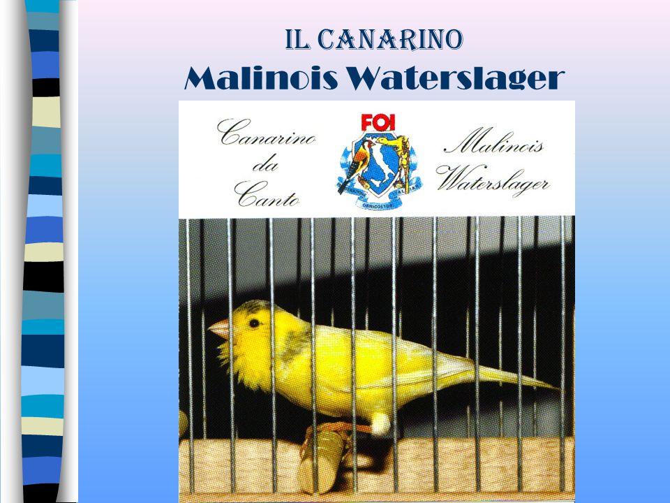 BENVENUTI ALLA I GIORNATA DI AGGIORNAMENTO DEL CLUB DEL MALINOIS di COSENZA Rende, 10/10/2007