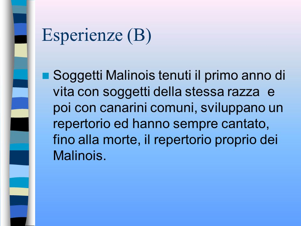 Esperienze (A) Conclusione: La razza Malinois è geneticamente diversa dalle altre con note inesistenti nelle altre razze e con modificazioni anatomo-funzionali della siringe ed altro come la posizione del corpo durante il canto e il becco pressocché chiuso.