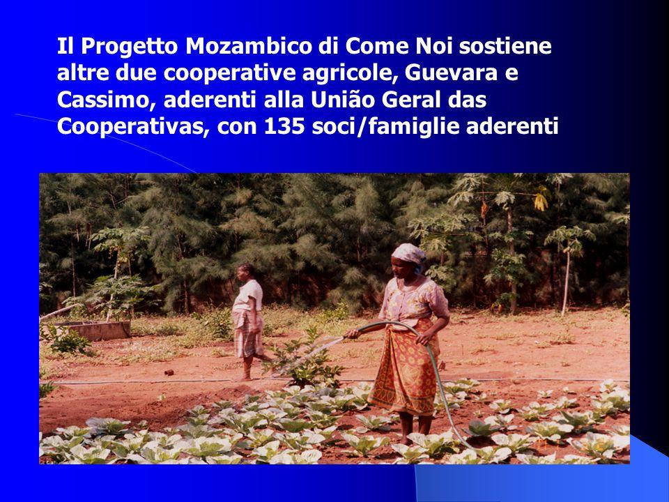 Il Progetto Mozambico di Come Noi sostiene altre due cooperative agricole, Guevara e Cassimo, aderenti alla União Geral das Cooperativas, con 135 soci/famiglie aderenti