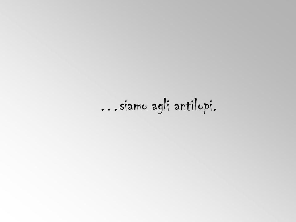 …siamo agli antilopi.