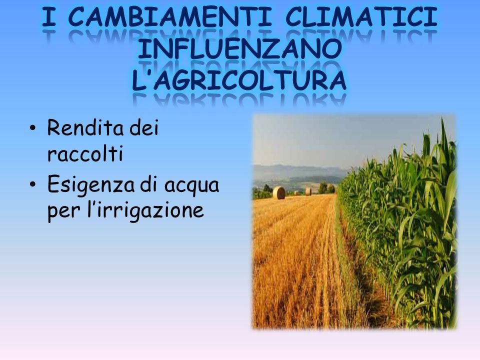 Rendita dei raccolti Esigenza di acqua per l'irrigazione
