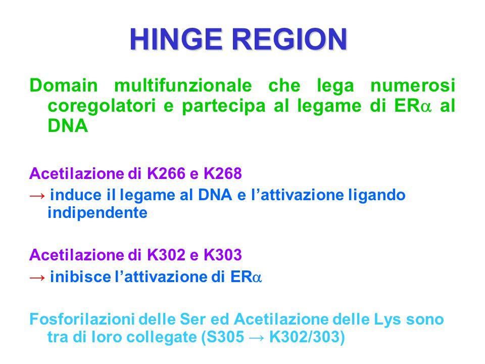 HINGE REGION Domain multifunzionale che lega numerosi coregolatori e partecipa al legame di ER  al DNA Acetilazione di K266 e K268 → induce il legame