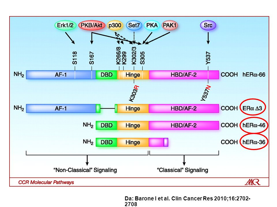 Da: Barone I et al. Clin Cancer Res 2010;16:2702- 2708