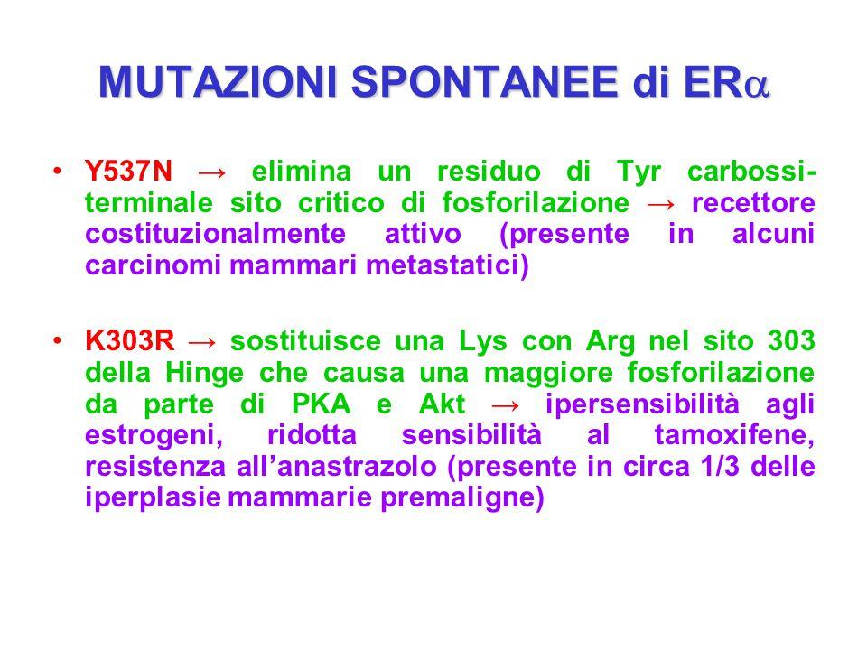 MUTAZIONI SPONTANEE di ER  Y537N → elimina un residuo di Tyr carbossi- terminale sito critico di fosforilazione → recettore costituzionalmente attivo