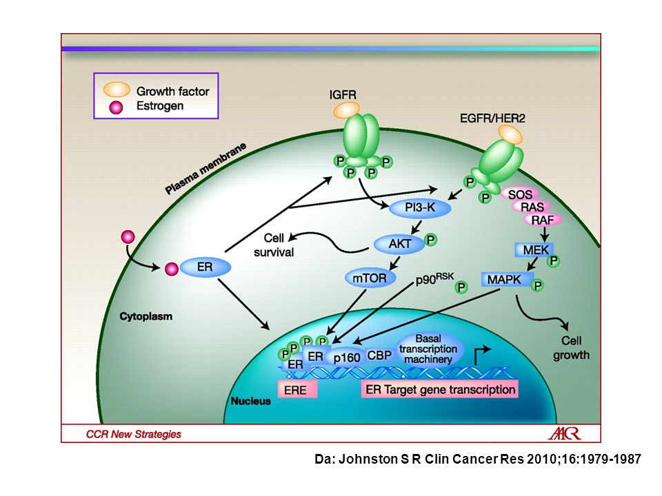 Da: Johnston S R Clin Cancer Res 2010;16:1979-1987