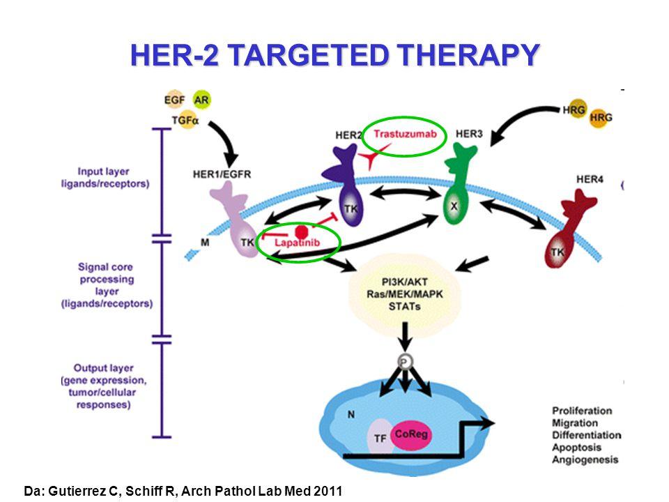 HER-2 TARGETED THERAPY Da: Gutierrez C, Schiff R, Arch Pathol Lab Med 2011
