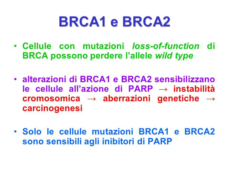 BRCA1 e BRCA2 Cellule con mutazioni loss-of-function di BRCA possono perdere l'allele wild type alterazioni di BRCA1 e BRCA2 sensibilizzano le cellule
