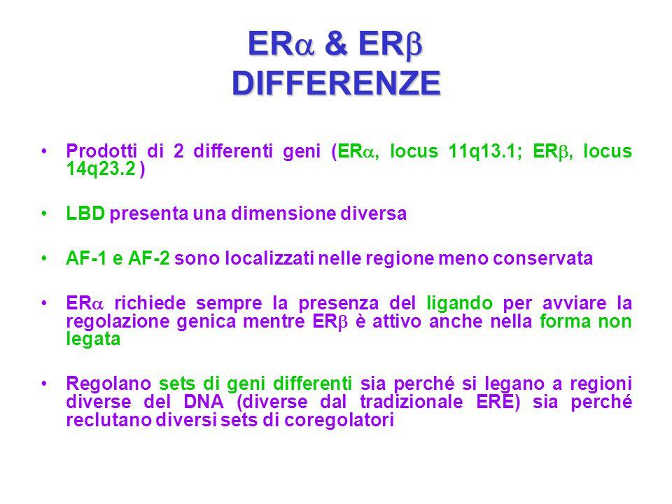 ER  & ER  DIFFERENZE Prodotti di 2 differenti geni (ER , locus 11q13.1; ER , locus 14q23.2 ) LBD presenta una dimensione diversa AF-1 e AF-2 sono