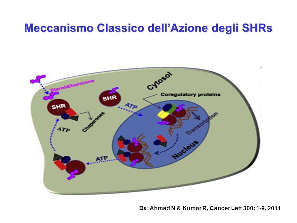 SHRs SHRs sono fattori di trascrizione ligando-attivati che comprendono i recettori per glucocorticoidi (GR), estrogeni (ER), progesterone (PR), androgeni (AR), e mineralocorticoidi (MR) SHRs sono costituiti da almeno 3 domains funzionali principali, che presentano diverse funzioni e diversi gradi di omologia: N- terminale (NTD)-, DNA binding domain (DBD-) il più conservato, e ligand binding (LBD)-domain C-terminale.
