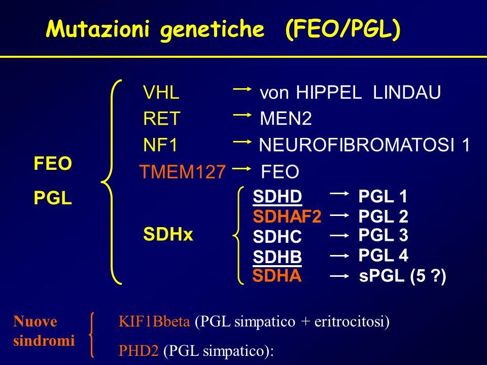 FEO PGL VHL RET NF1 Mutazioni genetiche (FEO/PGL) SDHC SDHB PGL 1 PGL 3 PGL 4 von HIPPEL LINDAU MEN2 NEUROFIBROMATOSI 1 SDHx SDHD PGL 2SDHAF2 TMEM127