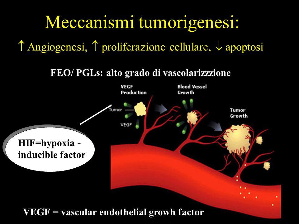 Meccanismi tumorigenesi:  Angiogenesi,  proliferazione cellulare,  apoptosi VEGF = vascular endothelial growh factor HIF=hypoxia - inducible factor