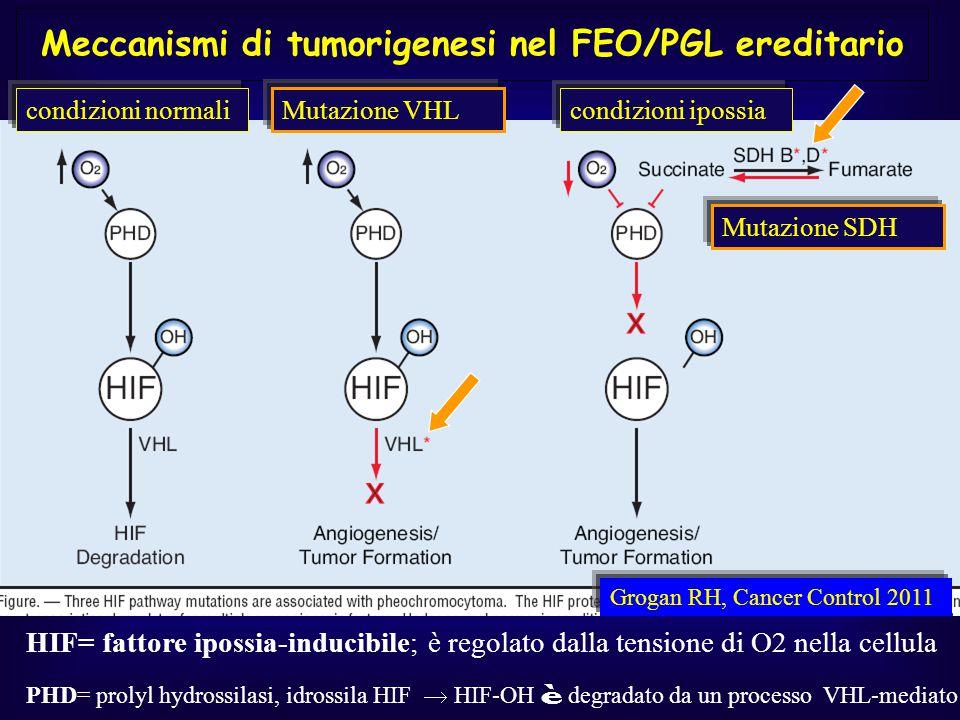 Meccanismi di tumorigenesi nel FEO/PGL ereditario Grogan RH, Cancer Control 2011 HIF= fattore ipossia-inducibile; è regolato dalla tensione di O2 nell