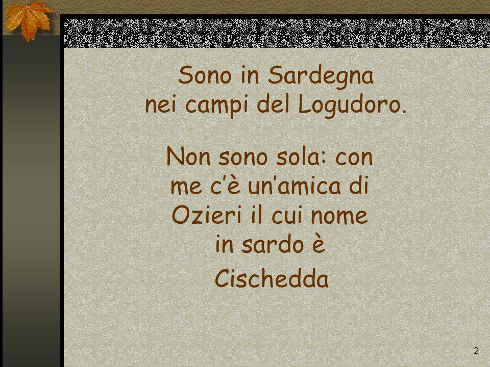2 Sono in Sardegna nei campi del Logudoro.