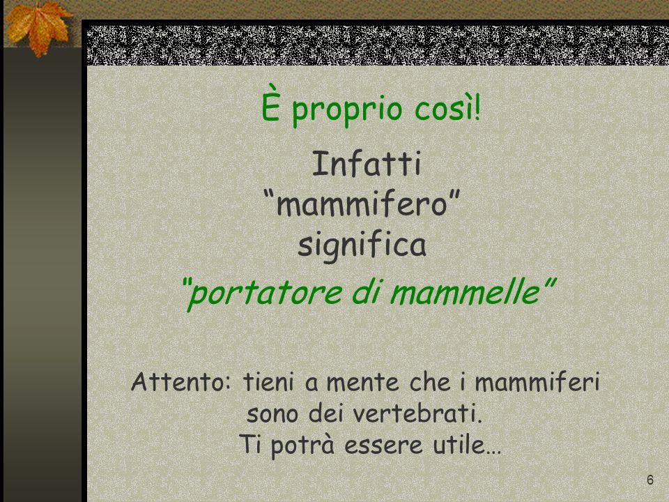 5 Mammifero forse è un animale che… Possiamo scegliere fra due possibilità 1 - Ha la mamma che da piccolo lo accudisce 2 – viene partorito da una mamm