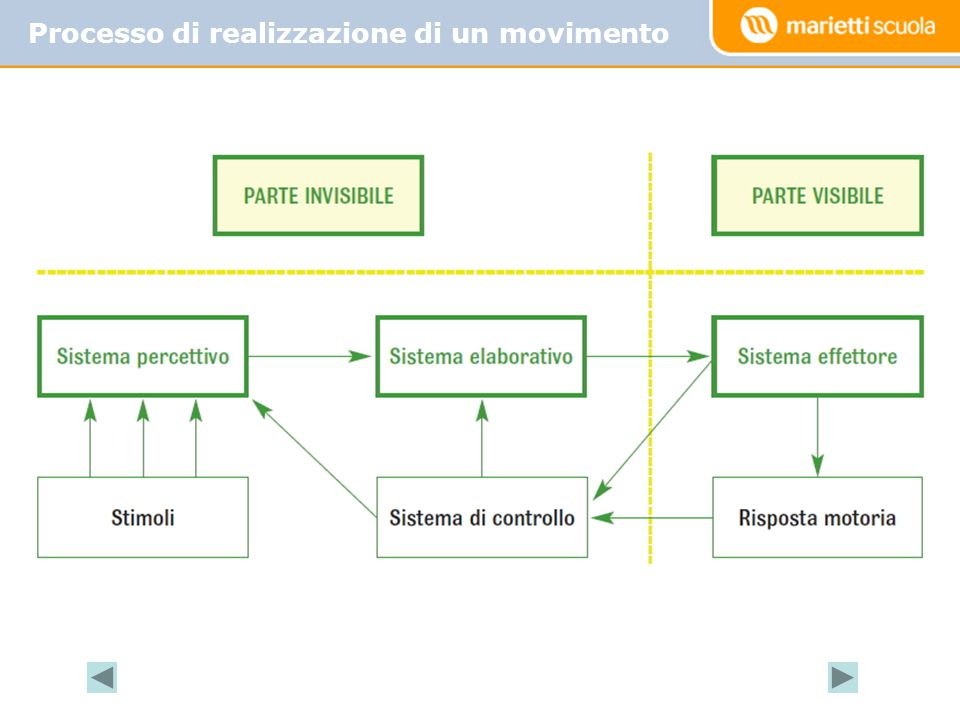 Principali modalità d'apprendimento: per imitazione per condizionamento per prove ed errori per intuizione (insight) per comprensione Le modalità d'apprendimento