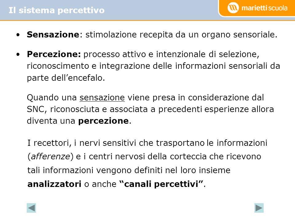 Sensazione: stimolazione recepita da un organo sensoriale. Percezione: processo attivo e intenzionale di selezione, riconoscimento e integrazione dell
